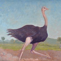 Avestruz 2 painting
