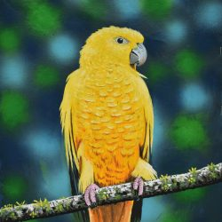 Loro amarillo painting